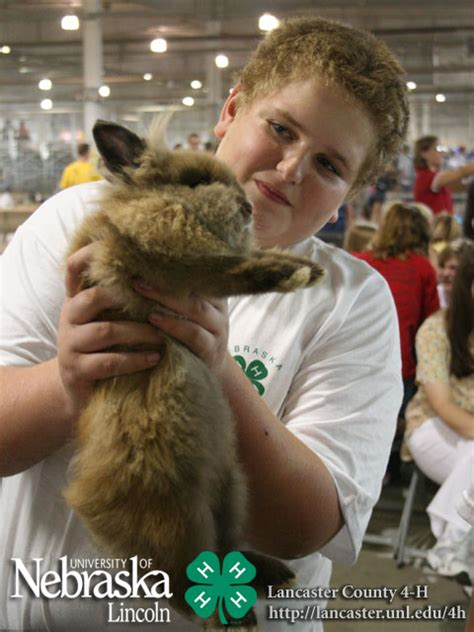 rabbit show   lancaster county fair