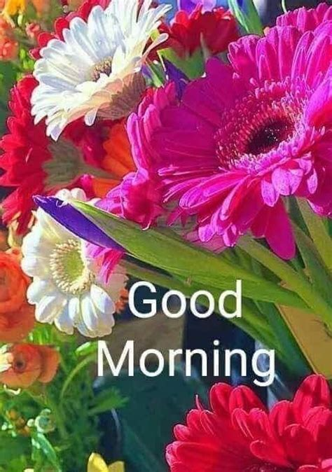 pin  nirmal minz  arti good morning flowers good