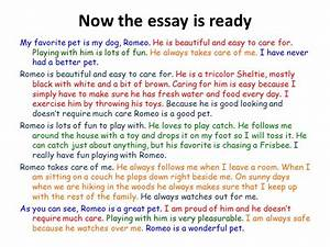 My Favorite Dog Essay Synonyms For Assignments My Favourite Dog  My Favorite Pet Essay Catholic Grant Writing Certification Online also Thesis Example Essay  Web Writing Services