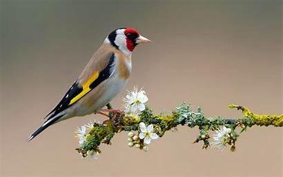 Bird Wallpapers Pixelstalk