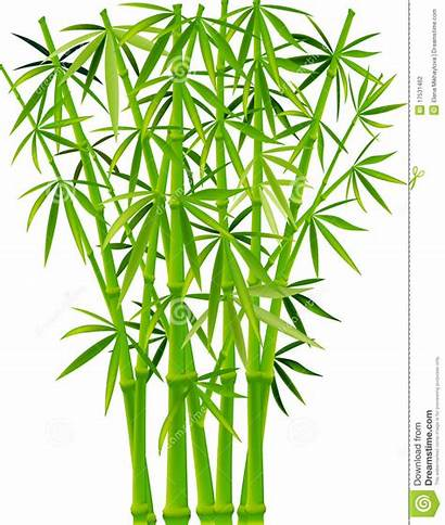 Bamboo Clipart Panda Plants Clip Background Forest