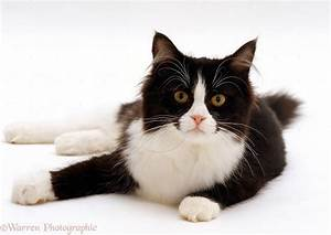Cute Black And White Cats Kittens Cat Pictures - Litle Pups