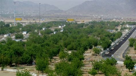 padang arafah hijau royo royo oleh pohon soekarno