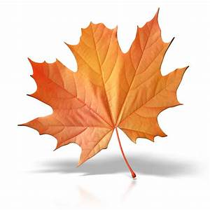 fall leaves | It's the end of summer. Is your business ...