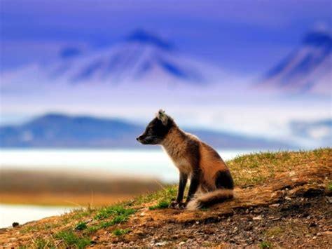 beautiful animals   planet