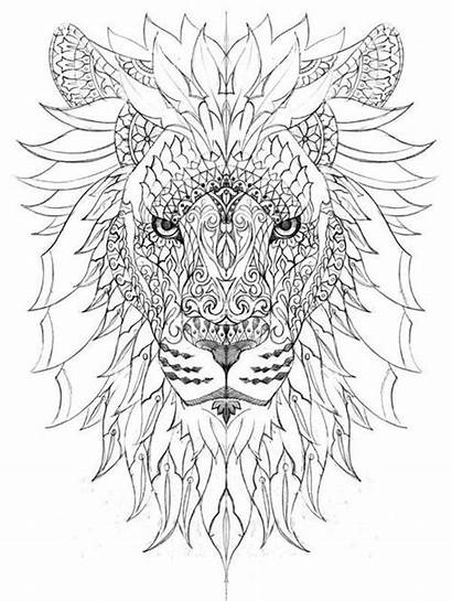 Coloring Lion Adult Stress Relief Popular Weheartit
