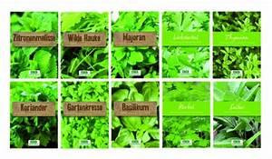 Kräuter Zusammen Pflanzen : kr uter im blumenbeet anpflanzen alles ber mischkulturen ~ Whattoseeinmadrid.com Haus und Dekorationen