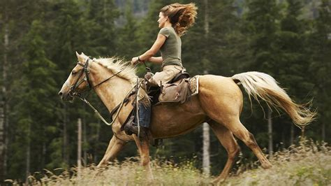 horse riding trail breeds equestrian