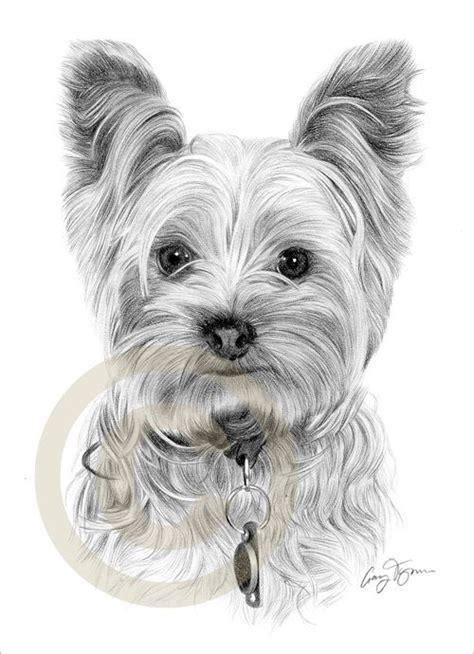 details  dog yorkshire terrier le art pencil drawing