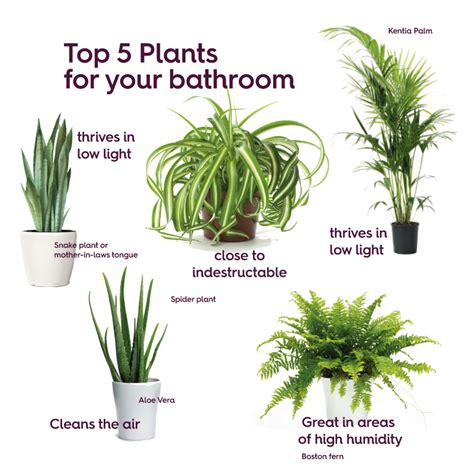 best plants for bathroom greenery interior design trend victoriaplum
