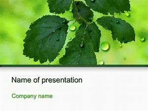 Themes For Microsoft Powerpoint 2007 Free Download Download Free Green Leaf Powerpoint Template For Presentation