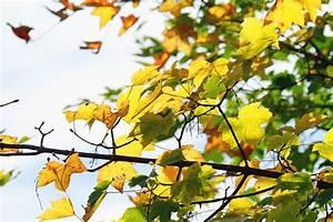 Kostenlose Bilder Herbst : herbst bilder kostenlose und lizenzfreie fotografien ~ Yasmunasinghe.com Haus und Dekorationen
