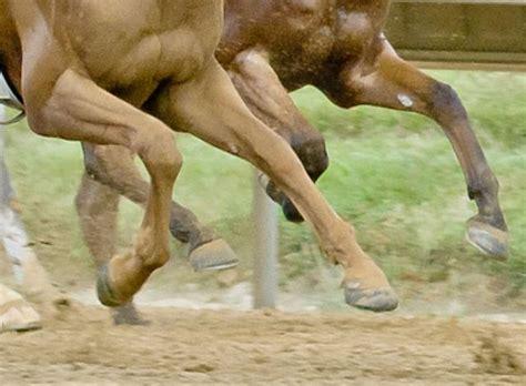 shoe easycare easyboot horse glue race urethane ten progress track flat making prototype hoof flexible hits
