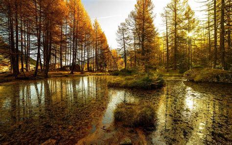 lake, Forest, Landscape, Nature, Autumn, Reflection ...