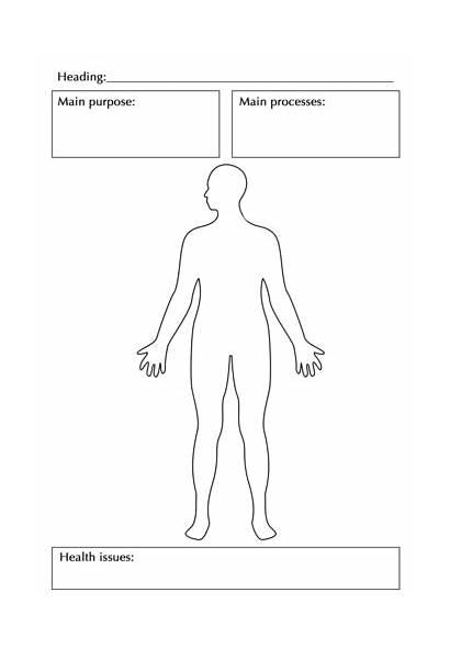 Human Systems System Siyavula Digestive Learners Photocopy