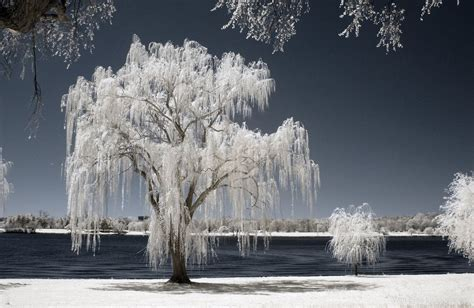 infrared photography  nature xcitefunnet