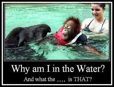 funny animal pictures  jokes