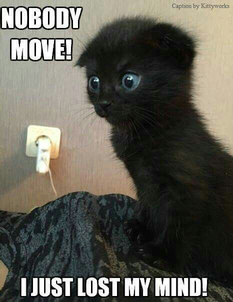 Lost Cat Meme - 30 happiest facts ever cat animal and funny animal