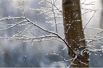Winter Snow Animated Gifs Snowing Nature Rain