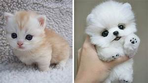 Cute baby animals - The cutest animals can only be puppies ...  Cutest