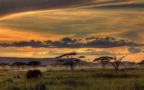 Safari Animal Wallpaper - safari wallpapers wallpaper cave