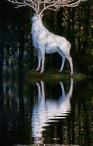 el misterio ciervo blanco melissa9 wattpad