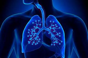 Usc Research Could Lead To Treatment For Common Lung Diseases