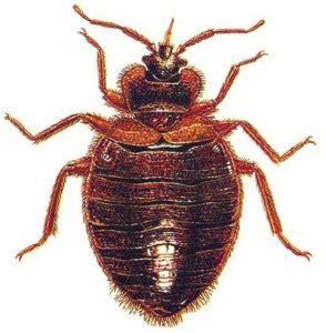 Bed Bug Registry by Usa News Bed Bug Registry