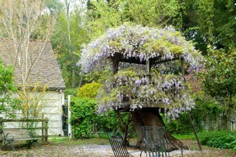 wisteria roots near house d 233 co jardin ext 233 rieur zen 20 id 233 es d inspiration
