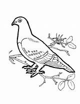 Coloring Dove Pages Jason Bird Voorhees Birds Pigeon Colour Drawing Preschoolers Drawings Getcolorings Printable Doves Mourning Popular Leave sketch template
