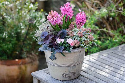 heuchera  hyacinth container gardenersworldcom