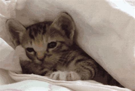 reasons  wed totally   cats cuteness