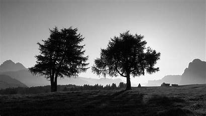 4k Trees Slope