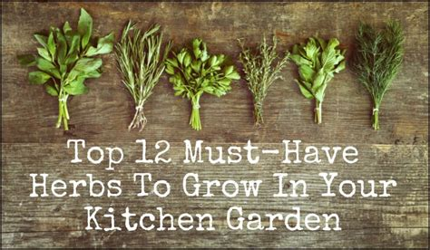 Kitchen In Your Garden by Top 12 Must Herbs To Grow In Your Kitchen Garden