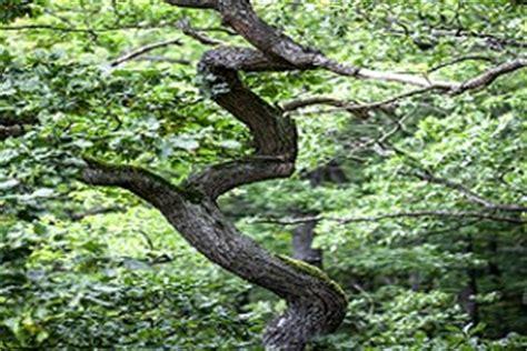 Der Grundriss Und Was Dabei Beachtet Werden Sollte by Kaminholz Wissen De Kategorie Wald Und Forst