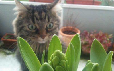 unbedenkliche pflanzen für katzen katzen und pflanzen k 246 nnen eine gef 228 hrliche kombination sein