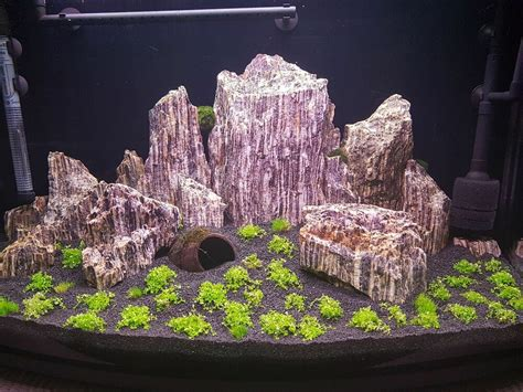 Aquascape Wood by 15 Kg Wood For An Aquarium Aquascaping