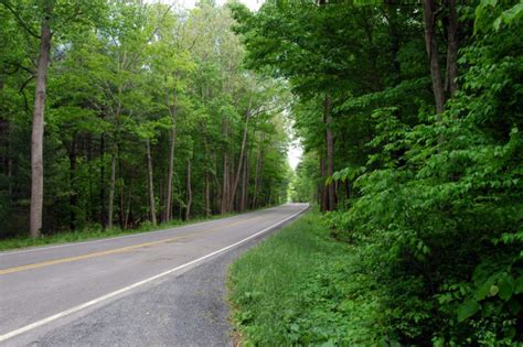 haunted forest  virginia