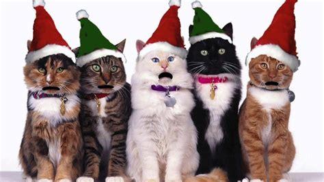 singing cats celebrate christmas