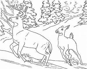 Free Realistic Animal Coloring Pages | Realistic Animal ...