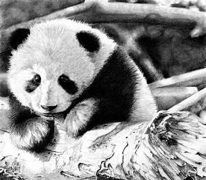 Baby Panda by BannanaPower on DeviantArt