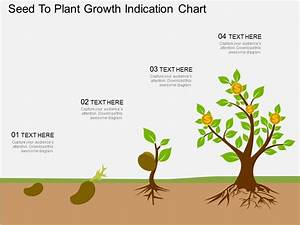 Oy Seed To Plant Growth Indication Chart Flat Powerpoint