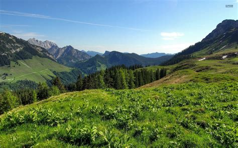plants of mountains mountains plants hills trees wallpapers mountains plants hills trees stock photos