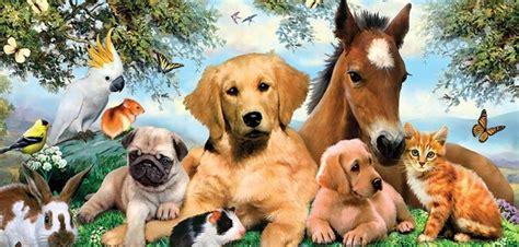 pets website design  rs   cost pets store