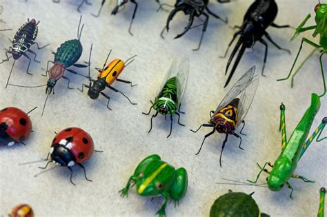 Why Is Insect Blood Green Or Yellow?  A Moment Of Science