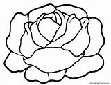 Lettuce Coloring Pages Template Sketch Print Clipart Clip Templates Central sketch template