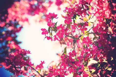 Flowers Pink Bloom Bokeh  Wallpaper (#1342179) Wallbase