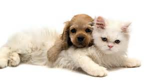 dogs that are with cats cats dogs wallpaper 1920x1080 wallpoper 260913