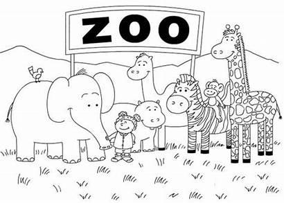 Coloring Zoo Pages Animals Printable Animal Kindergarten