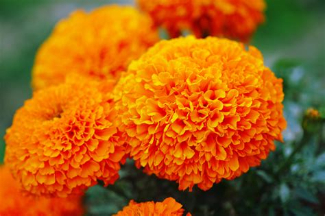 best flowers to plant in 10 best flowers to plant in the summer taskeasy blog